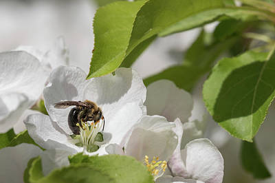 Photograph - Sweet Sweet Spring by Penny Meyers