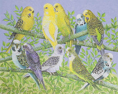 Parakeet Painting - Sweet Talking by Pat Scott
