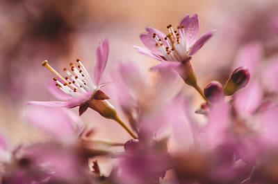 Photograph - Sweet Taste Of Spring by Jenny Rainbow