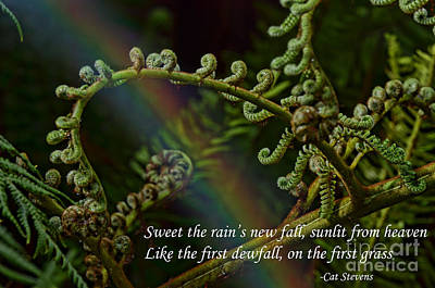 Photograph - Sweet The Rain's New Fall by Jim Fitzpatrick
