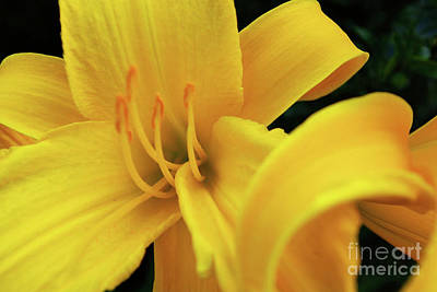 Photograph - Sweet Yellow Details  by John S