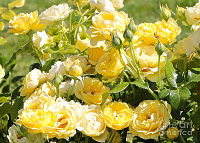 Photograph - Sweet Yellow Roses by Carol Groenen