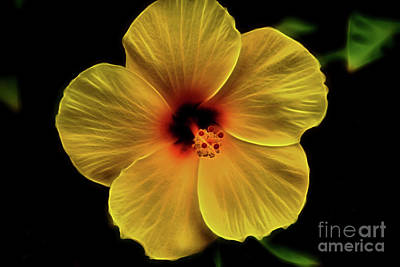 Photograph - Sweet Yellow by Steven Parker