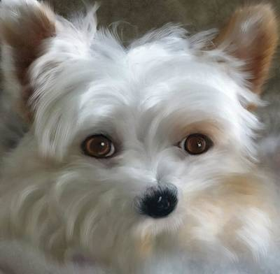 Photograph - Sweet Yorkie by Mary Timman
