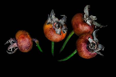Photograph - Sweetbrier by Edgar Laureano