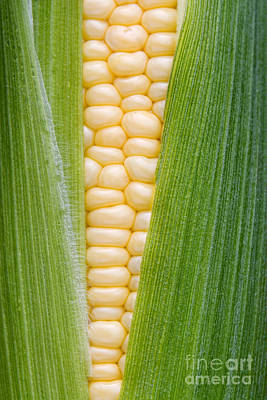 Home Grown Photograph - Sweetcorn by Tim Gainey