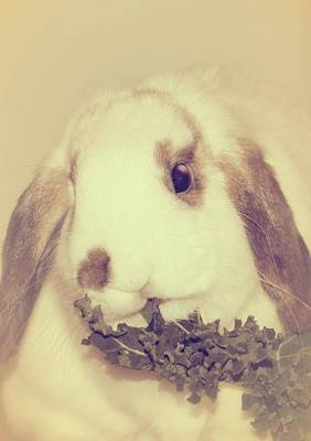 Bunny Photograph - Sweetest Bun by The Art Of Marilyn Ridoutt-Greene