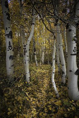 Photograph - Sweetheart Trail by Dusty Wynne