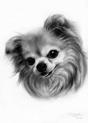 Chihuahua Drawing - Sweetie by Danguole Serstinskaja