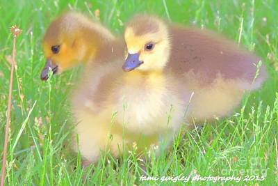 Photograph - Sweetness In The Grass by Tami Quigley