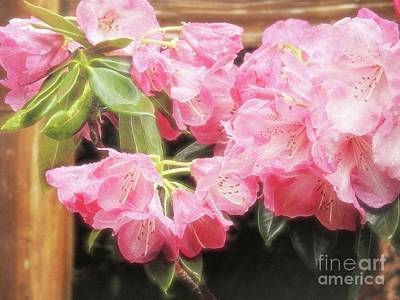 Photograph - Sweetness by Peggy Hughes