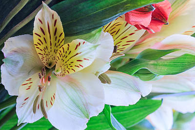 Photograph - Swept Away By Flowers by Joni Eskridge