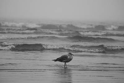 Photograph - Swept Up In The Waves Lynn Seagull by Toby McGuire