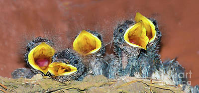 Yellow Beak Mixed Media - Swift Babies by Svetlana Sewell
