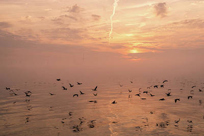Photograph - Swift Flight In Hot Pink Mist by Georgia Mizuleva