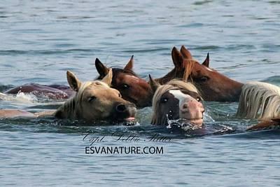 Photograph - Swim Riptide 5769 by Captain Debbie Ritter