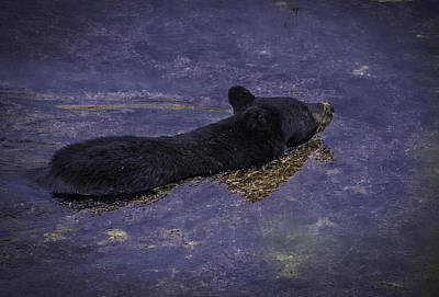 Photograph - Swimming Bear by Elizabeth Eldridge