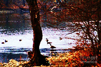Swimming Geese Art Print