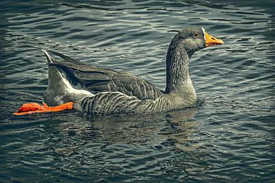 Digital Art - Swimming Goose by Sandra Selle Rodriguez