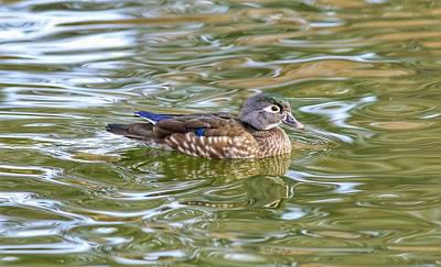 Photograph - Swimming In Swirls by Lynn Hopwood