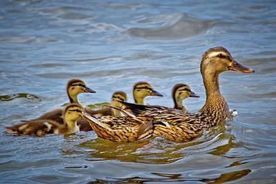 Photograph - Swimming Lesson by Linda Unger