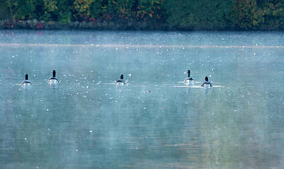 Belmont Lake State Park Wall Art - Photograph - Swimming Off Into The Morning Mist by Joan D Squared Photography