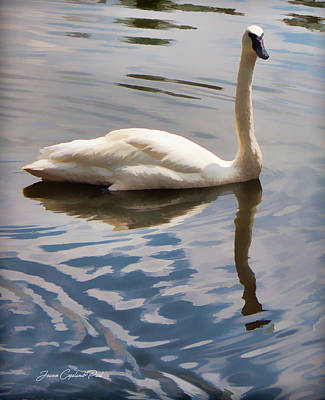 Photograph - Swimming Swan by Joann Copeland-Paul
