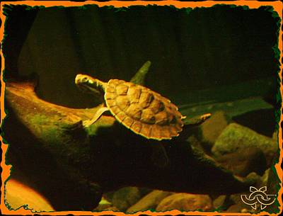 Photograph - Swimming Turtle by Jane Gordon