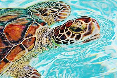 Photograph - Swimming Turtle by Tatiana Travelways