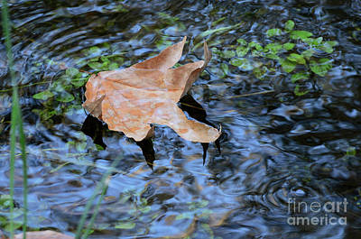 Photograph - Swirl Reflection by Debby Pueschel