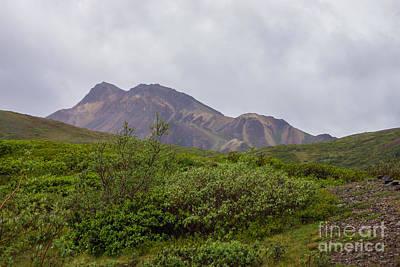 Photograph - Swirled Beauty In Denali by Jennifer White