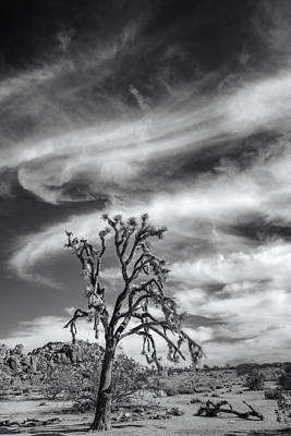 Swirling Clouds In Joshua Tree Print by Joseph Smith