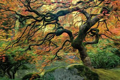 Photograph - Swirling Maple by Don Schwartz