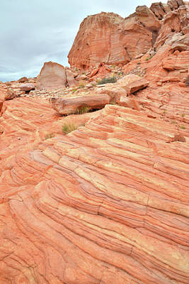 Photograph - Swirling Sandstone Color In Valley Of Fire by Ray Mathis