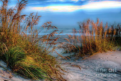 Photograph - Swirling Wind Swaying Sea Oats by Dan Carmichael