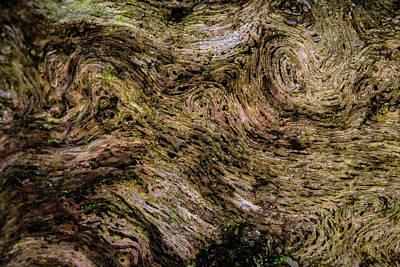 Photograph - Swirls And Patterns Of Nature by Douglas Barnett