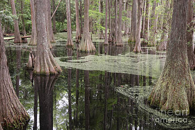 Photograph - Swirls In The Swamp by Carol Groenen