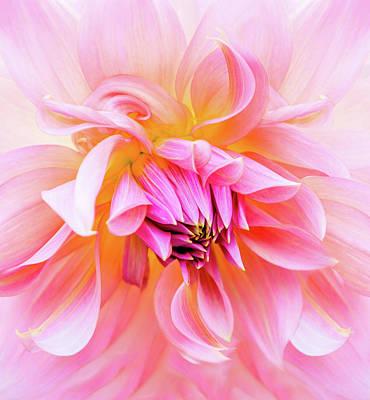 By Jackie Photograph - Swirls Of Pink And Cream by Jackie Sajewski