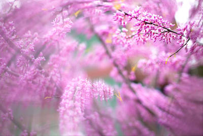 Photograph - Swirls Of Spring by Kunal Mehra
