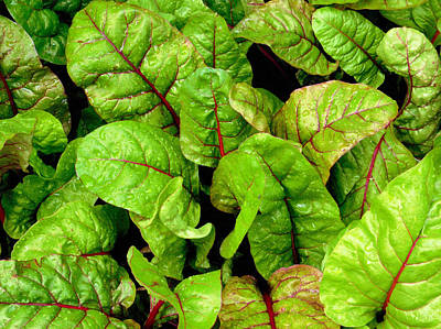 Spinach Painting - Swiss Chard In A Vegetable Garden 3 by Lanjee Chee