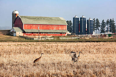 Dairy Farm Photograph - Swiss Cranes by Todd Klassy
