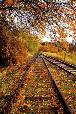 Photograph - Switching To Autumn by David Patterson