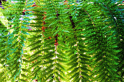 Photograph - Swordfern Basket By H H Photography Of Florida by HH Photography of Florida