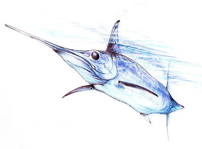 Swordfish Drawing - Swordfish  by John Dinsdale