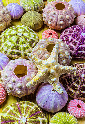 Purple Sea Stars Wall Art - Photograph - Syarfish And Sea Urchins by Garry Gay