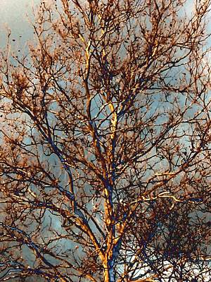 Sycamore Against November Sky Art Print by Beth Akerman