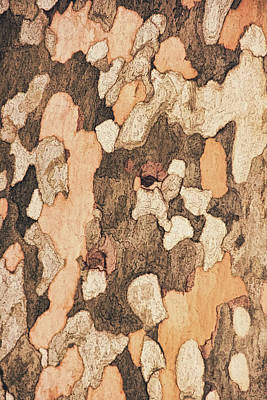 Photograph - Sycamore Bark Tone by Theo O'Connor