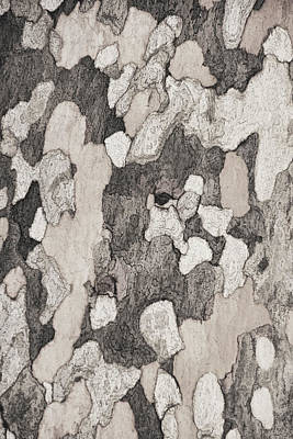 Photograph - Sycamore Bark  by Theo O'Connor