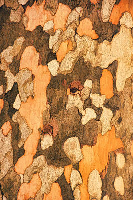 Photograph - Sycamore Bark Txt by Theo O'Connor