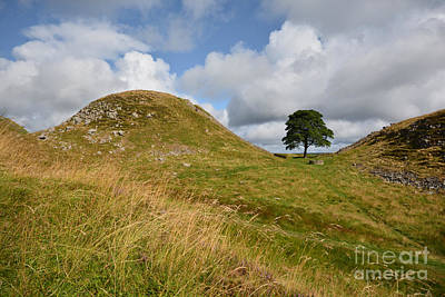 Northumberland Photograph - Sycamore Gap by Smart Aviation